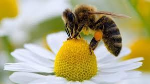 Державна дотація за бджолосім'ї